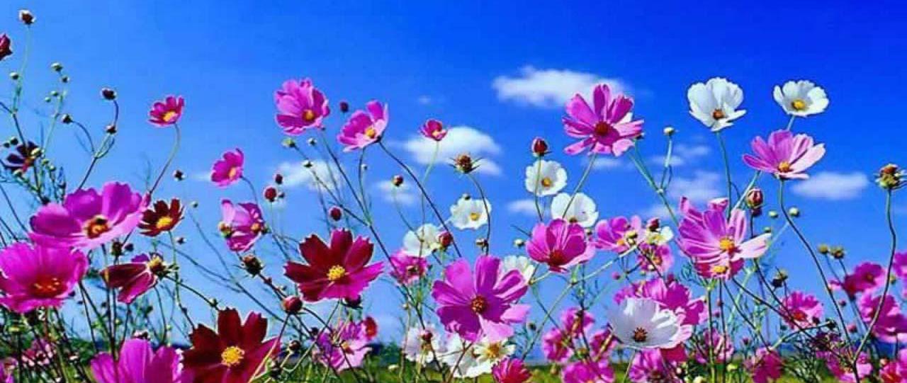 spring-flowers-d23688-h900