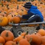 pumpkinpacth